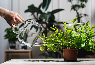 Muurla watering can clear